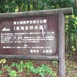 青木ヶ原樹海