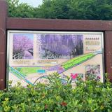 大三島藤公園