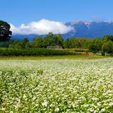 開田高原のそばの花