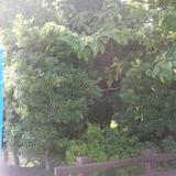 寝屋川公園