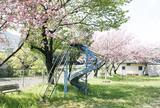 俵米神社公園の桜
