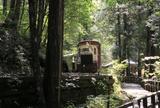 赤沢自然休養林でトロッコ列車を