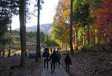 鶏足寺紅葉散策路
