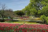 【春の人気観光スポット20選】春の大阪を楽しむ花見・グルメ・絶景スポットランキングを大公開!
