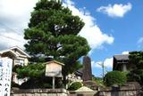 武蔵VS吉岡一門「一乗寺下り松」