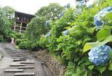 あじさいの名所「西山 善峯寺」