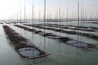 河内海岸の写真・動画_image_100720