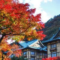 富士屋ホテルの写真・動画_image_101459