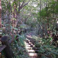 冠ケ岳の写真・動画_image_101606