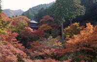 高源寺の写真・動画_image_104511