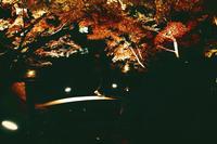 大田黒公園の写真・動画_image_104980