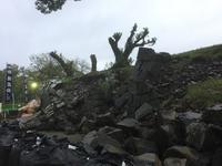 加藤神社の写真・動画_image_106217