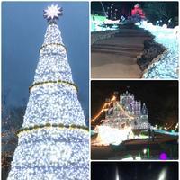ネスタリゾート神戸の写真・動画_image_111098