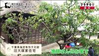 旧大塚家住宅の写真・動画_image_111389
