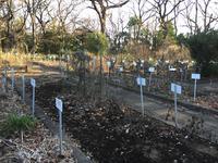 小石川植物園の写真・動画_image_113262
