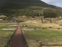 八丈富士牧野・ふれあい牧場の写真・動画_image_122383