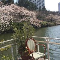 CANAL CAFE (カナルカフェ)の写真・動画_image_125772