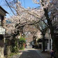 鎌倉宮の写真・動画_image_126704