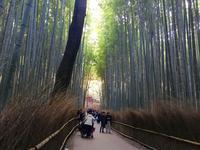 嵯峨野 竹林の道の写真・動画_image_126771