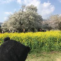 一心行の大桜の写真・動画_image_127342