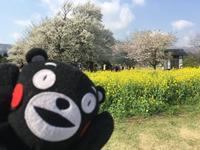 一心行の大桜の写真・動画_image_127345