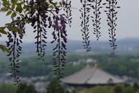 若草山の写真・動画_image_132676