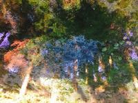 白川水源の写真・動画_image_133335