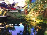 白川水源の写真・動画_image_133336