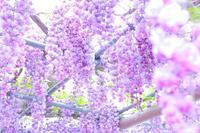 曼陀羅寺公園の写真・動画_image_133535