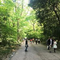 糺ノ森の写真・動画_image_134338