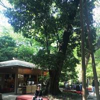 糺ノ森の写真・動画_image_134339