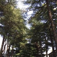 あがたの森公園の写真・動画_image_134790