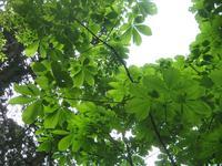 出羽三山神社の写真・動画_image_135614
