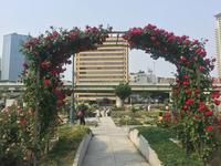 中之島公園の写真・動画_image_136602