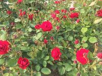 中之島公園の写真・動画_image_136606