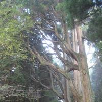 幣立神宮(幣立神社)の写真・動画_image_139084