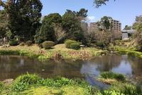 江津湖の写真・動画_image_139197