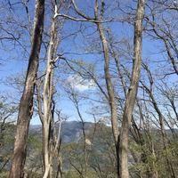 御岳山の写真・動画_image_140276