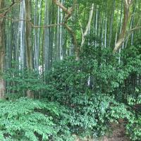 北山公園の写真・動画_image_141527