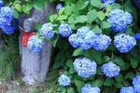 矢田寺の写真・動画_image_142989