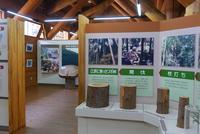 21世紀の森公園の写真・動画_image_143858