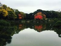 清澄庭園の写真・動画_image_144152