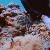 青の洞窟の写真・動画_image_148668