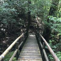 屋久島自然休養林(ヤクスギランド)の写真・動画_image_152098