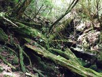 屋久島自然休養林(ヤクスギランド)の写真・動画_image_152100