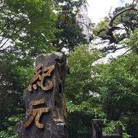 紀元杉の写真・動画_image_152102
