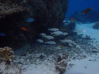 嘉比島の写真・動画_image_158285