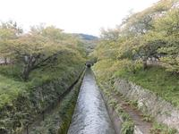琵琶湖疏水の写真・動画_image_161245