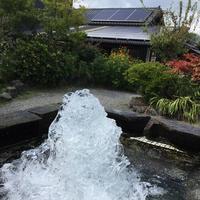 ヒバリカフェの写真・動画_image_161706