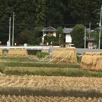 草津白根山の写真・動画_image_162058